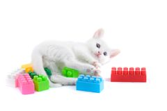 Kitten with toys. Royalty Free Stock Photography