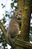 Kitten on a tree Stock Photos