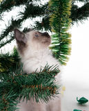 Kitten in the tree Royalty Free Stock Photos