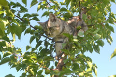 Kitten on the tree. Gray kitten climbed a tree and hid in the foliage stock photography
