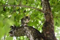 Kitten in the tree. Little kitten on the tree Royalty Free Stock Photo