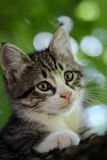 Kitten on the tree Royalty Free Stock Image