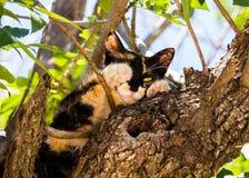 Kitten in the tree royalty free stock photos