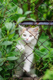 Kitten trying to climb through the fence of mesh netting. Photographed in Russia, in the Orenburg region, in the countryside Stock Photos