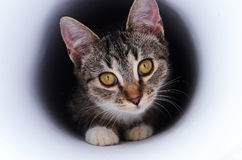 Kitten in tunnel Stock Images