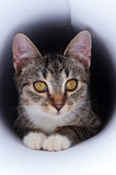 Kitten in tunnel Royalty Free Stock Photos
