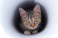 Kitten in tunnel Royalty Free Stock Photography