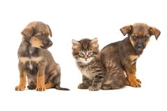 Kitten and two puppy Stock Photo