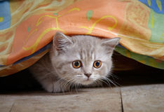 Kitten under bed Stock Images