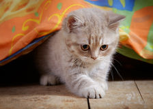 Kitten under bed Royalty Free Stock Image