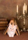 Kitten under a book stock photos