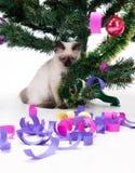 Kitten under Christmas tree. With dekoration stock photos