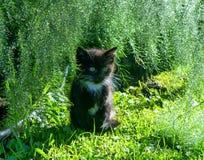 Kitten Under los helechos de Asparagas imagen de archivo