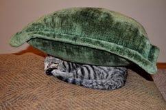 Kitten under a pillow stock photo