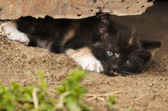 Kitten under rusty tin Stock Photos