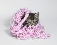 Kitten under wool Royalty Free Stock Image