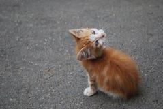 Kitten is upside down Royalty Free Stock Image
