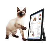 Kitten Using Social Media Stock Photography