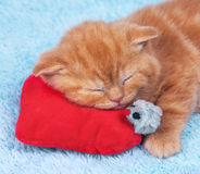 Kitten on Valentine's Day Royalty Free Stock Photos