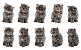 Kitten variation on the white background Royalty Free Stock Photos