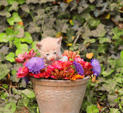 Kitten in a vase with flowers Royalty Free Stock Photo