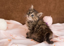 Kitten. Very kind and nice kitten Royalty Free Stock Images