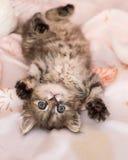 Kitten. Very kind and nice kitten Royalty Free Stock Photography