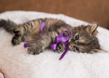 Kitten. Very kind and nice kitten Stock Images