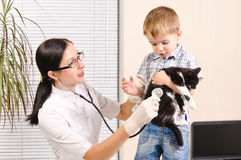 Kitten at the vet Royalty Free Stock Photos