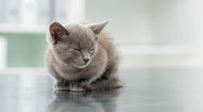 Kitten in veterinary office Royalty Free Stock Photography