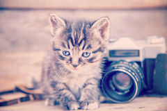 Kitten with vintage photo camera Stock Photo