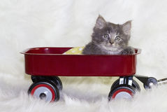 Kitten in a wagon. Stock Photos