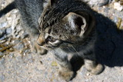 Kitten on a walk. Small tabby kitten in the street, photographed from the top down stock images
