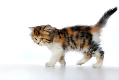Kitten walking Stock Images