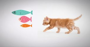 Kitten walking after fish graphics. Digital composite of Kitten walking after fish graphics Stock Photo