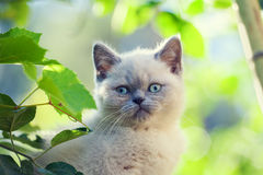Kitten walking in the garden Royalty Free Stock Images