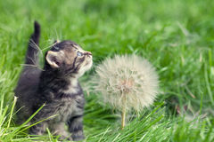 Kitten walking on the grass Stock Image