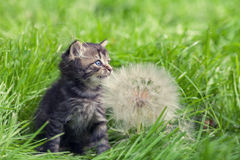 Kitten walking on the grass Stock Photos