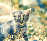 Kitten walking in the grass Stock Images