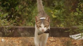 Kitten Walking i trädgård med den stora pilbågen royaltyfria bilder