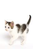 Kitten Walking op Witte Achtergrond stock afbeelding