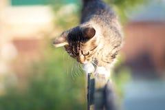 Kitten walking on a wooden fence Stock Photos