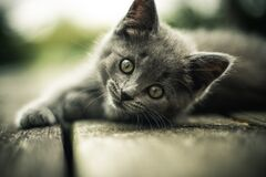 Kitten on walkway Stock Photos