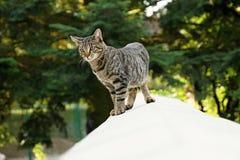 Kitten on the wall Stock Photo