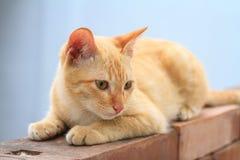 Kitten on the wall Royalty Free Stock Photos