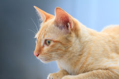 Kitten on the wall Royalty Free Stock Photography