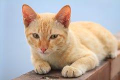 Kitten on the wall Royalty Free Stock Photo