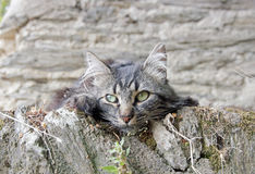 The kitten walls Royalty Free Stock Photography