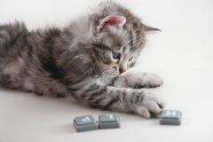 Kitten wants help Royalty Free Stock Photo