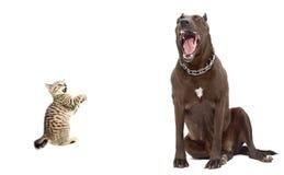 Free Kitten Was Scared Big Dog Royalty Free Stock Image - 37185596